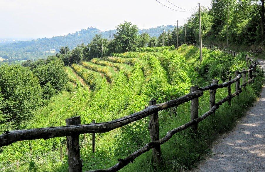 Vineyard in Montevecchia