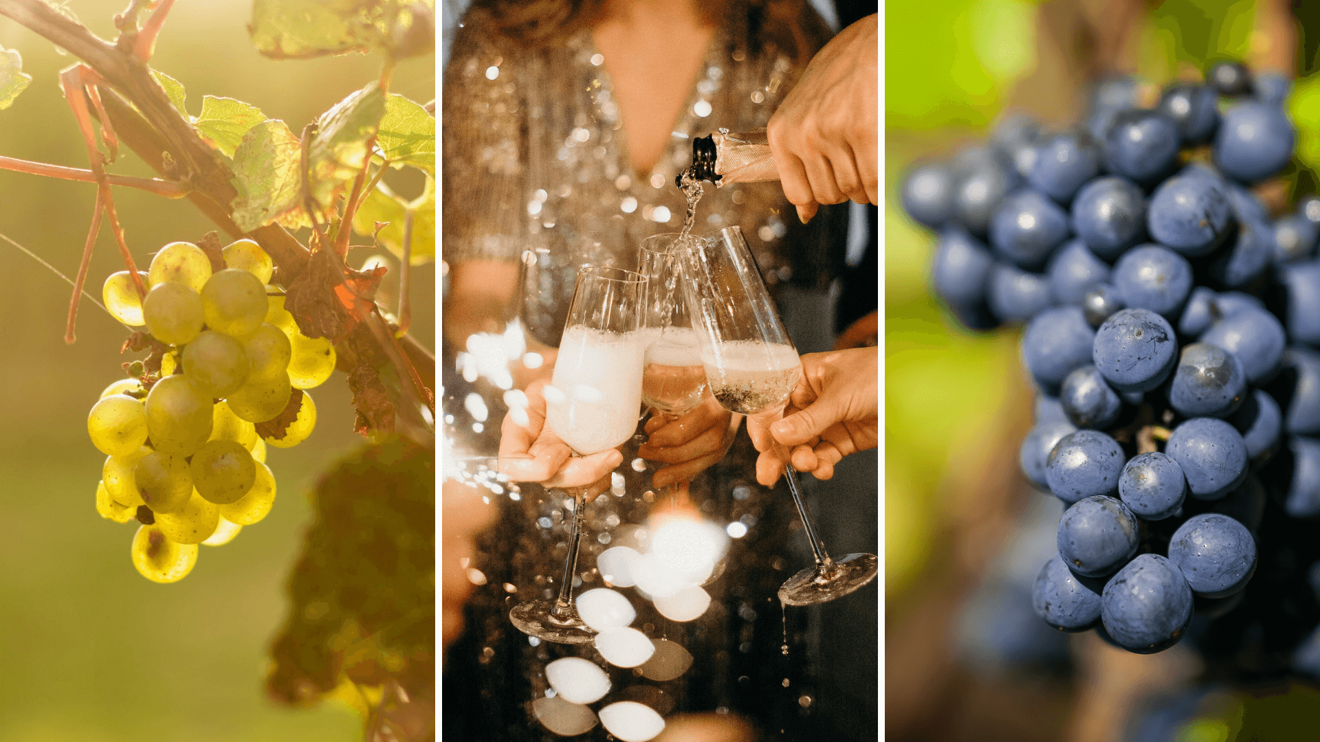 Grapes and aging methods of Prosecco and franciacorta wines